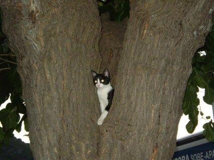 FOTKA - kotě  u moře na stromě