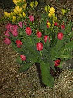 FOTKA - Jarní kytice