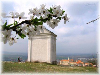 FOTKA - Jarní větévka a Mikulovský zámek