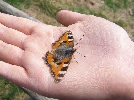 FOTKA - pochroumaný motýlek