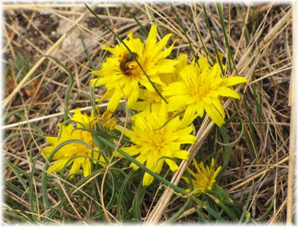FOTKA - 4 žluté květinky a včelka
