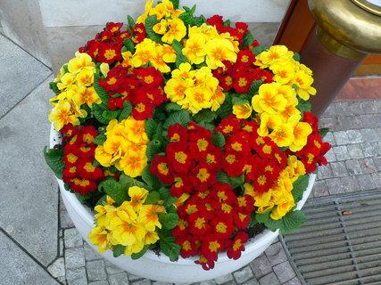 FOTKA - květinová výzdoba
