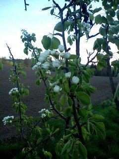 FOTKA - květy