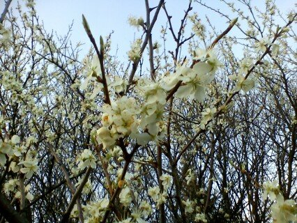 FOTKA - květy-