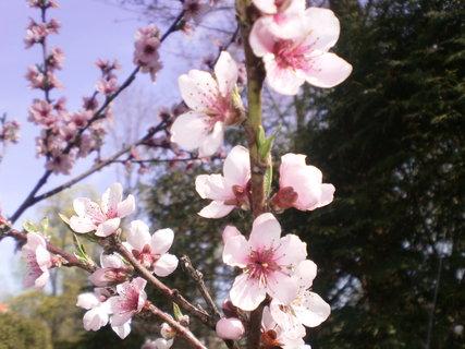 FOTKA - Pěkné květy