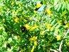 Žlutý květy
