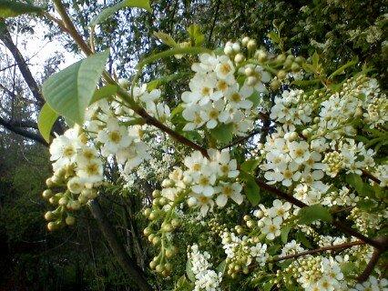 FOTKA - spousta květů