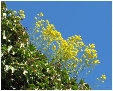 FOTKA - Žluté květy
