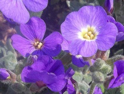 FOTKA - 3.květen  na zahradě