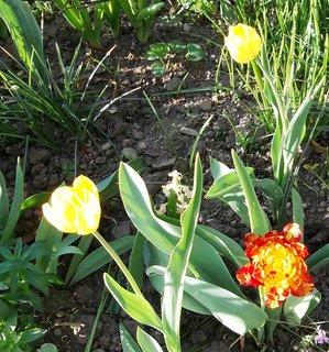 FOTKA - Květen  na zahradě