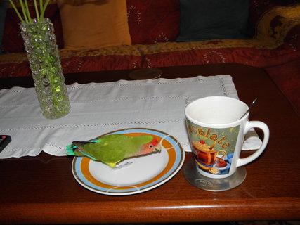 FOTKA - k snídani byli ptáčci :-)