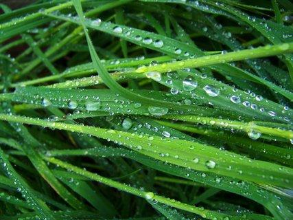 FOTKA - 6.5.2012, tráva po dešti