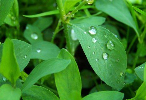 FOTKA - 6.5.2012, plevel po dešti....,,,,,,