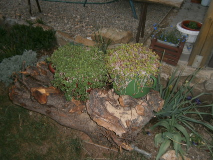 FOTKA - zahrada 3