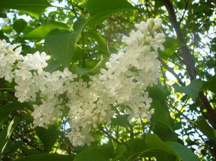 FOTKA - Nádhera a vůně jara