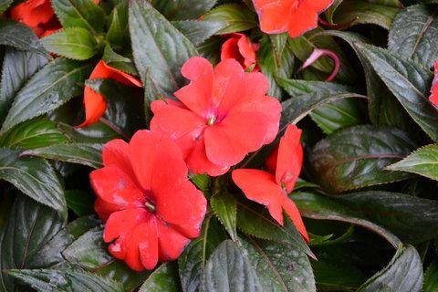 FOTKA - jarní krása.........