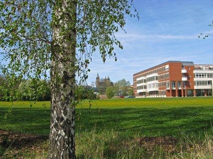 FOTKA - univerzitní budova na pampeliškové louce