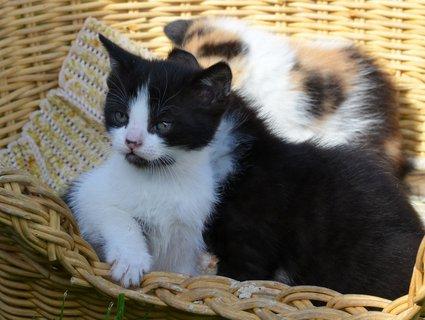FOTKA - Dubnová koťátka