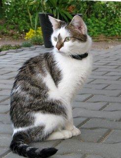 FOTKA - domácí princezna, kočka Kikina
