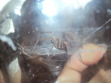 FOTKA - Pavoučci
