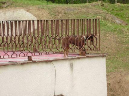 FOTKA - pes na balkoně