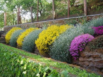 FOTKA - kvetoucí koberce