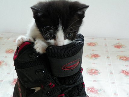 FOTKA - kotě v botě