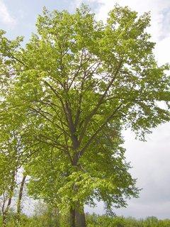 FOTKA - další strom u rybníka