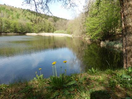 FOTKA - NP Podyjí, rybník