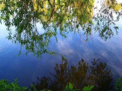 FOTKA - květen - Šeberovský rybník, vrba nad vodou..