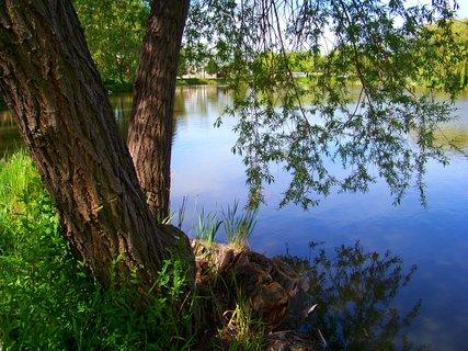 FOTKA - květen, Šeberovský rybník ,....
