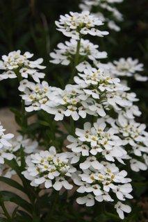 FOTKA - Zahrádka - květen 2012 VII.