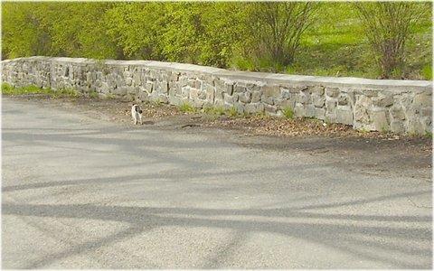 FOTKA - něčí kočička toulající se po vesnici