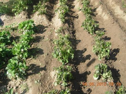 FOTKA - prevít mráz - brambory