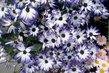 U květinářství...1