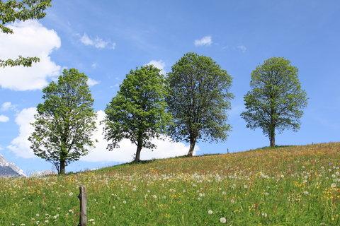 FOTKA - Z dnešní, konečně jarní procházky k Ritzensee 8