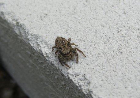 FOTKA - pavouk,