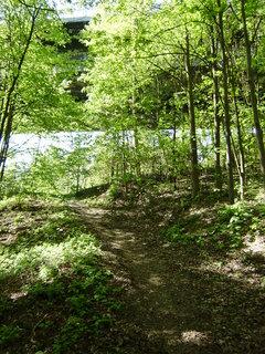 FOTKA - v lese