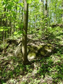 FOTKA - jen tak v lese
