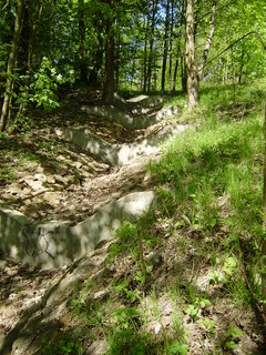 FOTKA - jen tak v lese 2