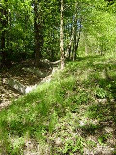 FOTKA - jen tak v lese 3