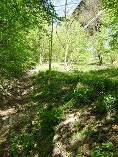 FOTKA - jen tak v lese 5
