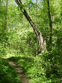 FOTKA - jen tak v lese 6