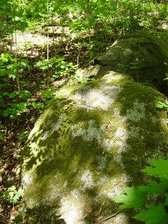 FOTKA - jen tak v lese 7
