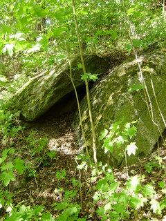 FOTKA - jen tak v lese 8