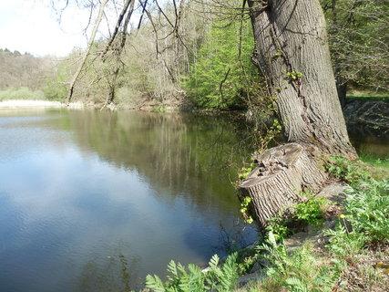 FOTKA - jarní toulání Podyjím, rybník