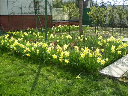 FOTKA - záhrada2
