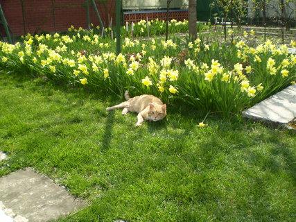 FOTKA - záhrada3