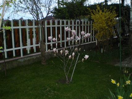 FOTKA - záhrada4