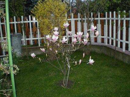 FOTKA - záhrada5